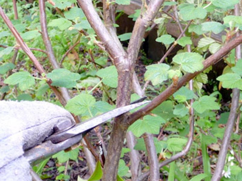 Pruning. Credit Allison Levin