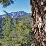 Bigcone bark and views across the San Gabriel Wilderness.