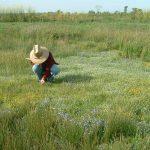 Vernal Pool Botanizing - Carol Witham