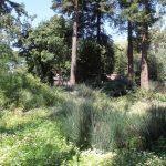 A native garden in Berkeley, California