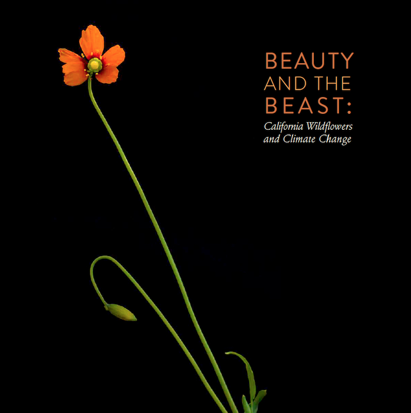 Cover of Beauty and the Beast Book by Nita Winter and Rob Badger