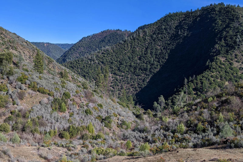 A view from the North Fork American River Shaded Fuel Break Project near Colfax, California. Photo: Emily Underwood